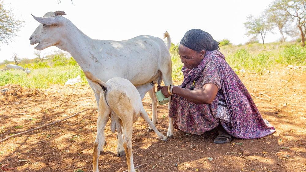 Madina medverkar i ett Islamic Relief-program i Kenya